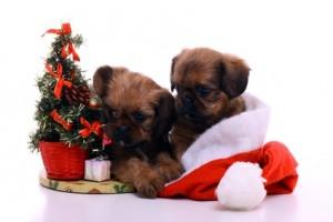 tiere schenken zu weihnachten eine wirklich gute idee. Black Bedroom Furniture Sets. Home Design Ideas